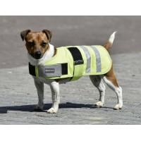 Dog Rug SHINE