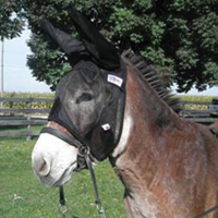 Quiet Ride Donkey Fly Mask w/ Ears